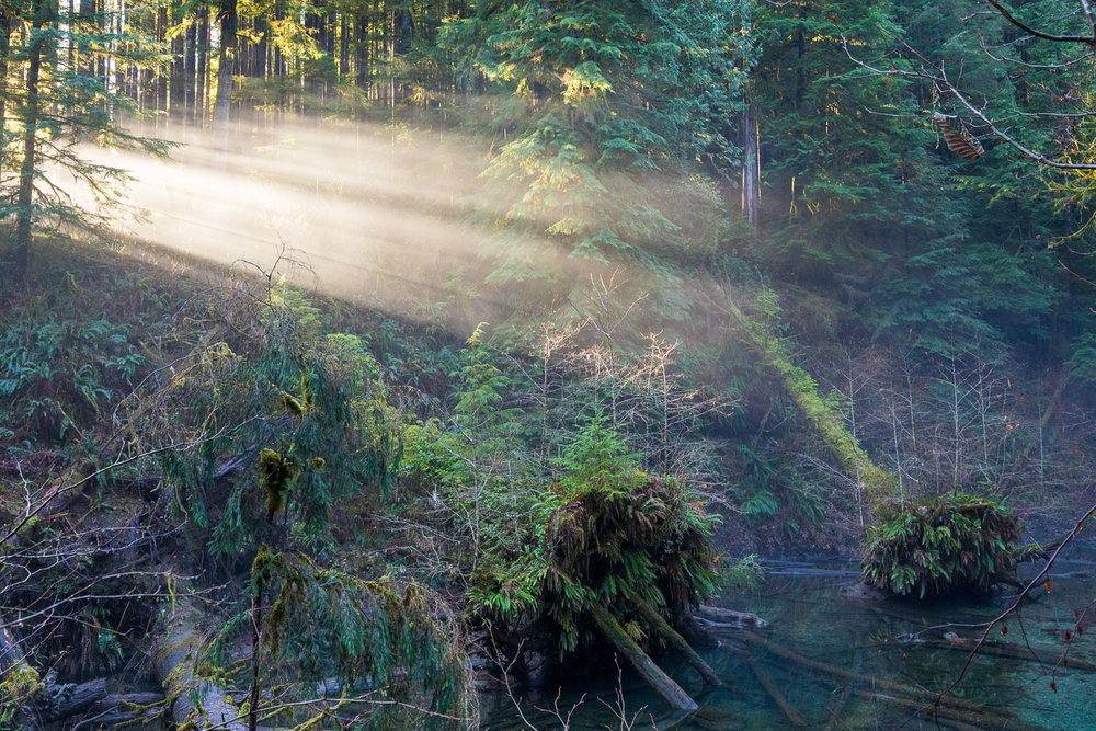 During a hike through the 'FernGully Grove' near Port Renfrew this winter, the sun was casting heavenly rays through the mist, illuminating the cool blue water and lush green ferns of the forest. It really is all about being in the right place at the right time, but that being said, much is still left up to luck. You can only be outside so much of the time and it always leaves me wondering what stunning sights must appear on a daily basis that only the mountains, trees, and wildlife will ever bear witness to.