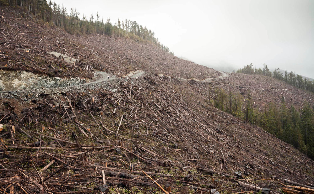 clearcut-logging-road-port-renfrew.jpg