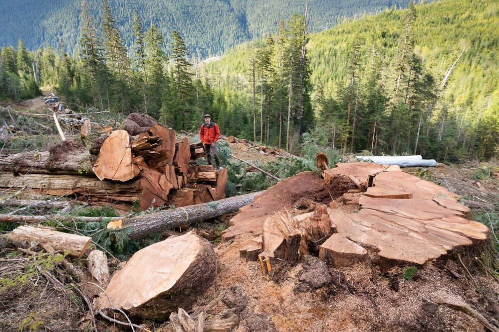 nahmint-valley-alberni-logging-old-growth.jpg