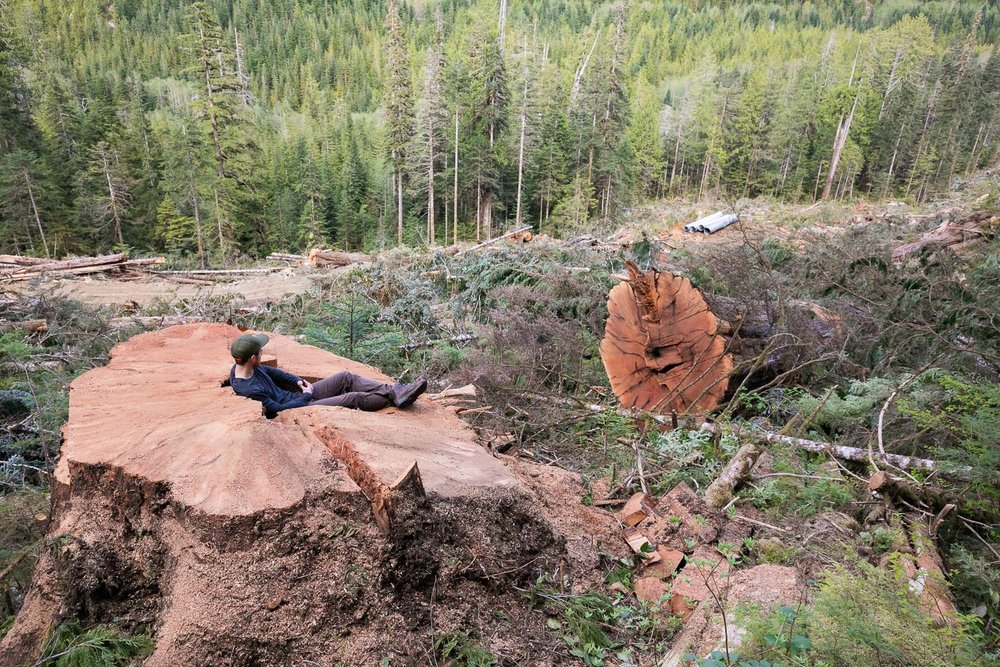 nahmint-valley-cedar-tree-stump-logging.jpg