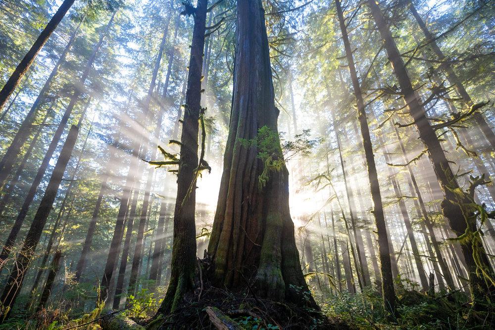 Avatar-Grove-Sunbeams-1.jpg
