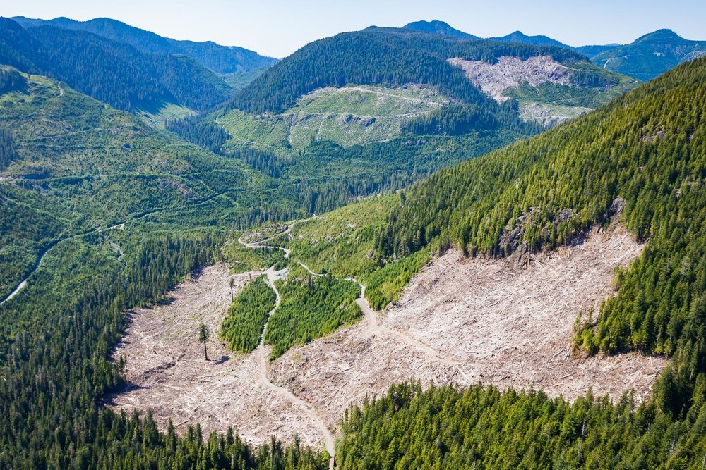 big-lonely-doug-clearcut-aerial-port-renfrew.jpg