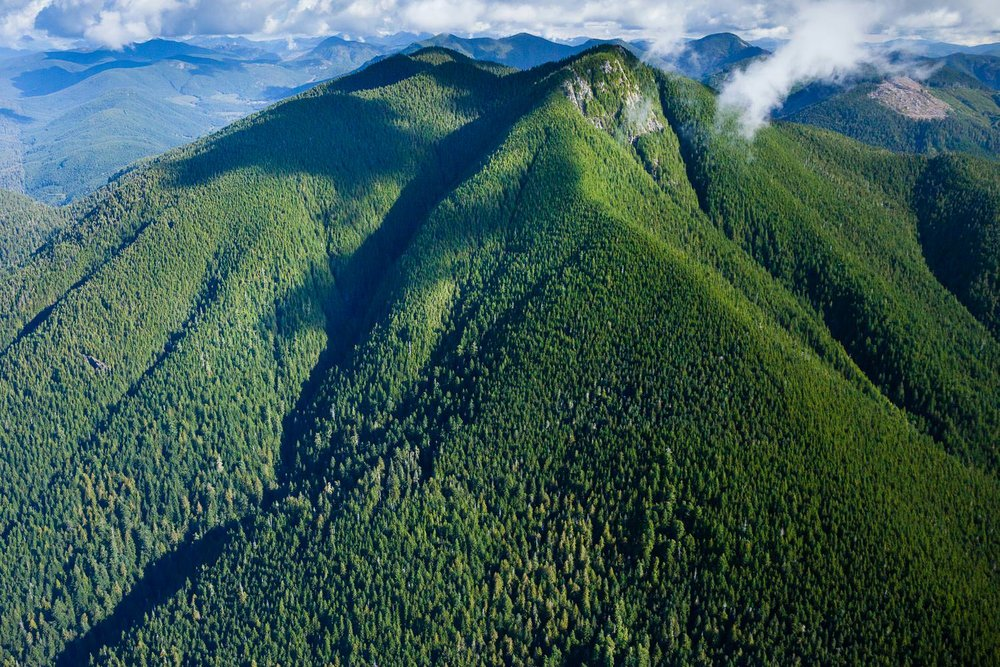 The Edinburgh Mountain Ancient Forest near Port Renfrew in Pacheedaht territory. The recent logging taking place would be in the lower righthand corner of the frame.