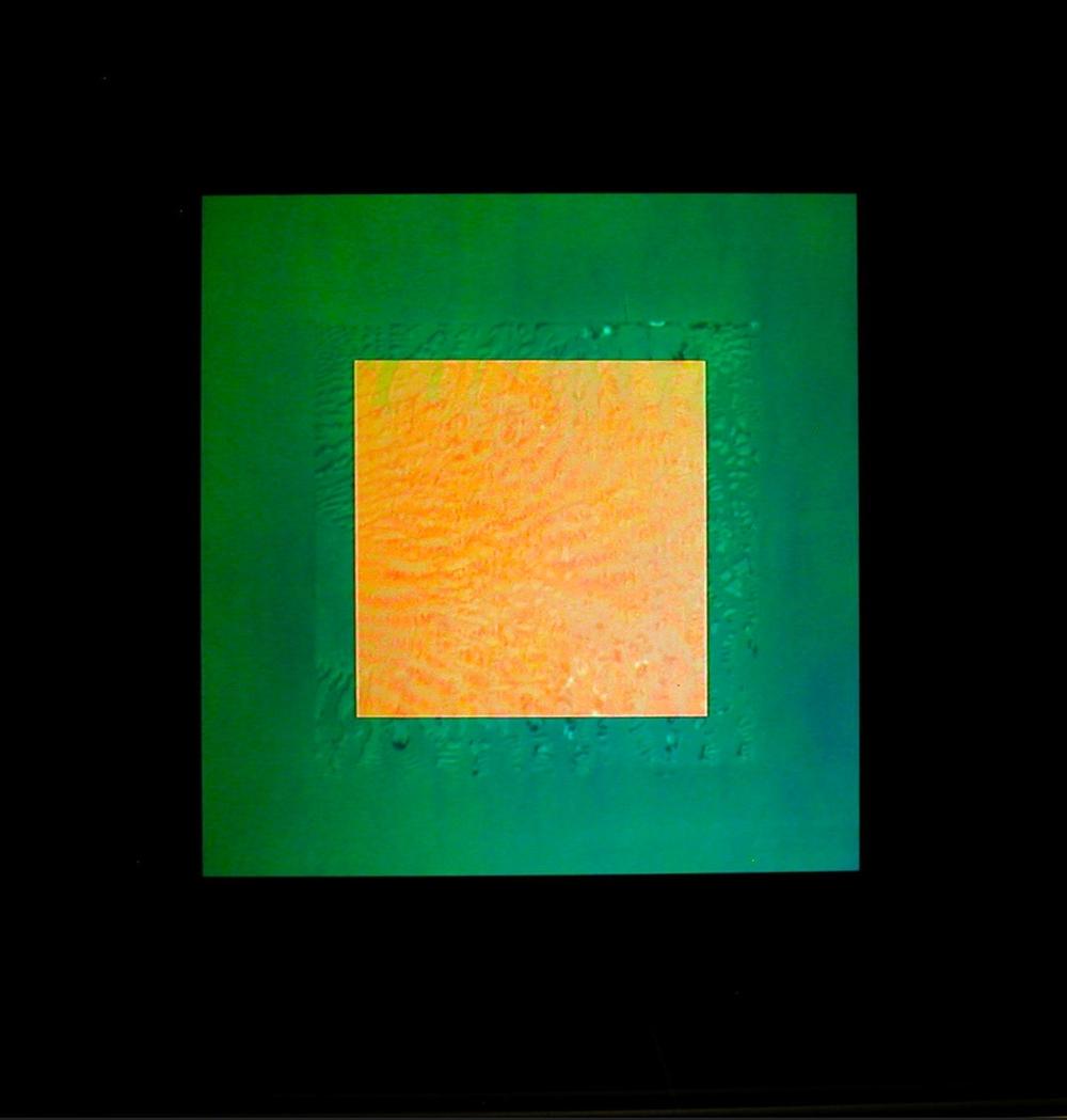 NOACHIS CEN 1500.jpg