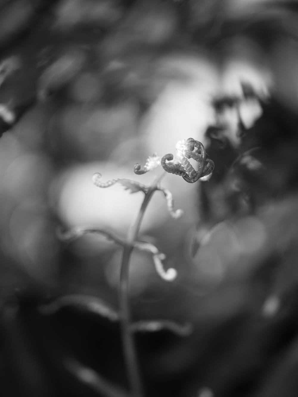 untitled shoot-080.jpg
