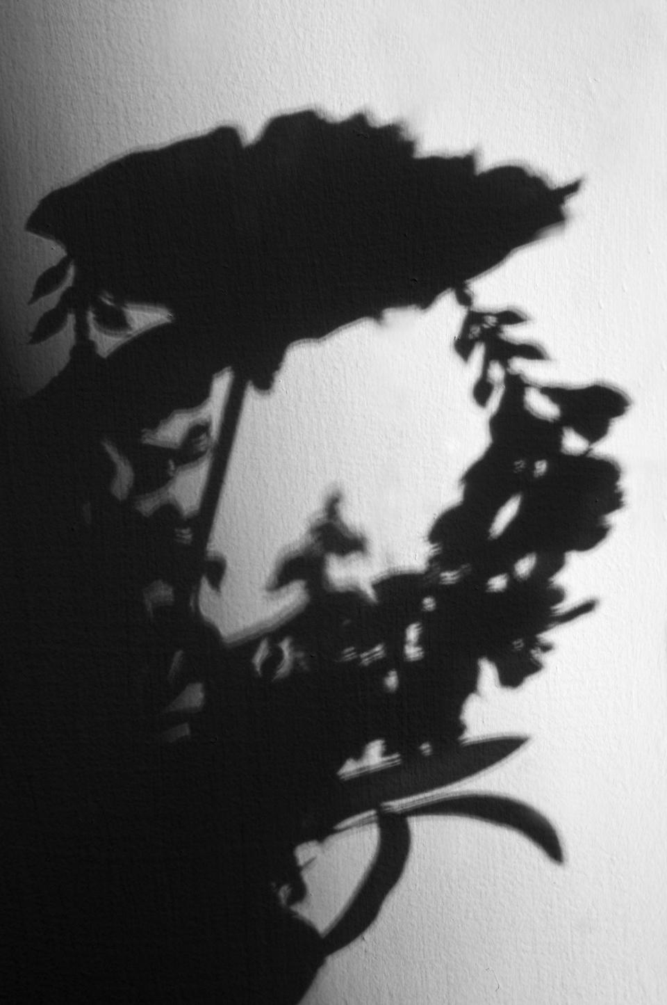 small-flower-shadow.jpg