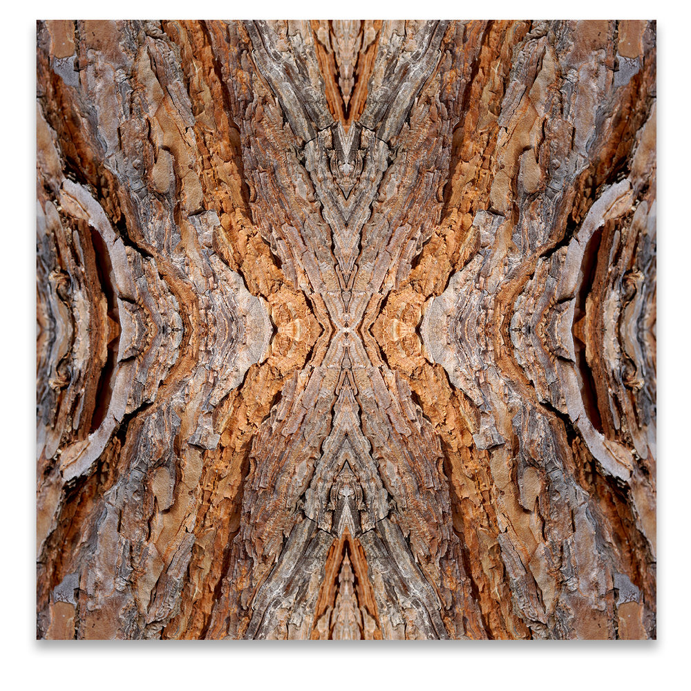 © TREE BARK COMPOSITION No.97