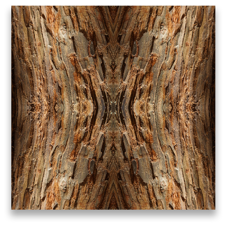 © TREE BARK COMPOSITION No.42
