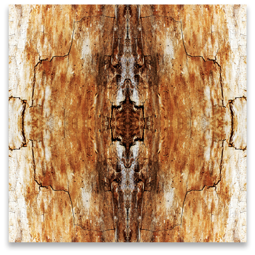 © TREE BARK No.183