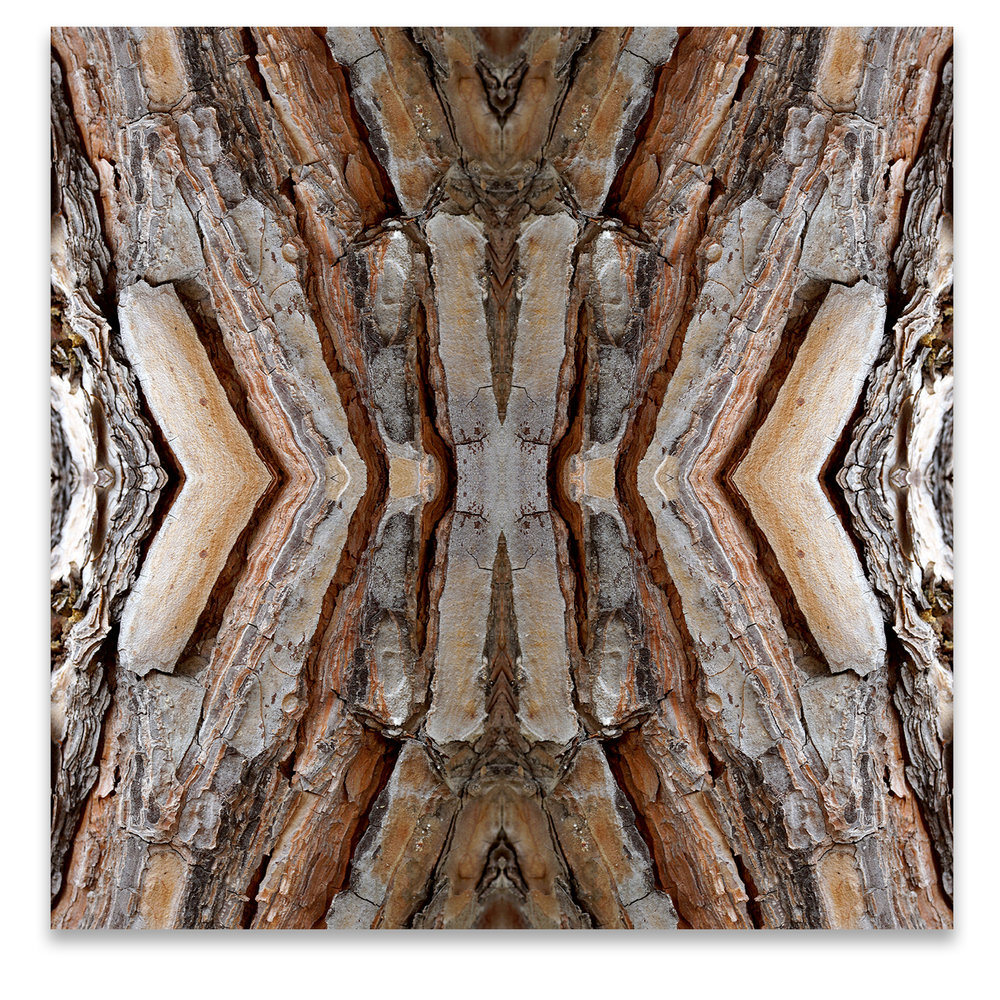 © TREE BARK COMPOSITION No.96