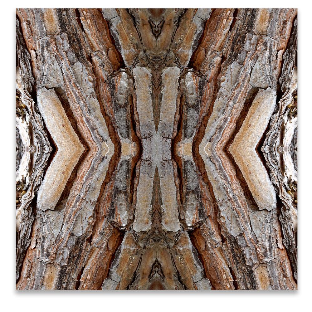 © TREE BARK COMPOSITION No.96