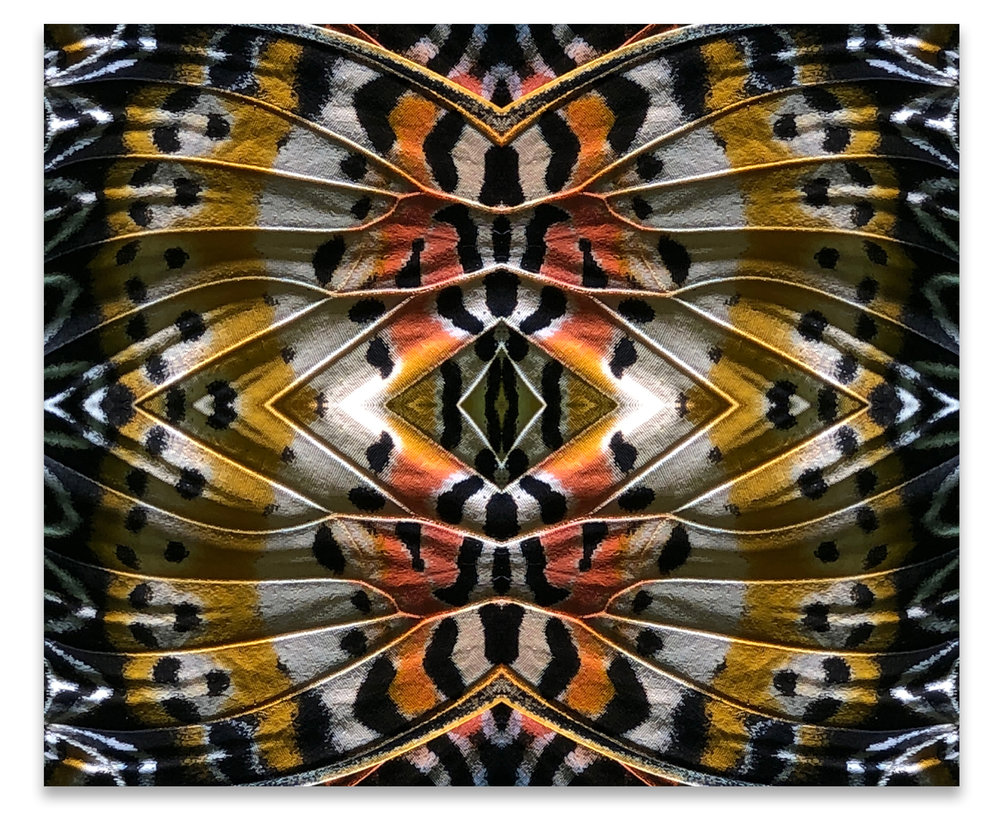 © BUTTERFLIES COMPOSITION No.5
