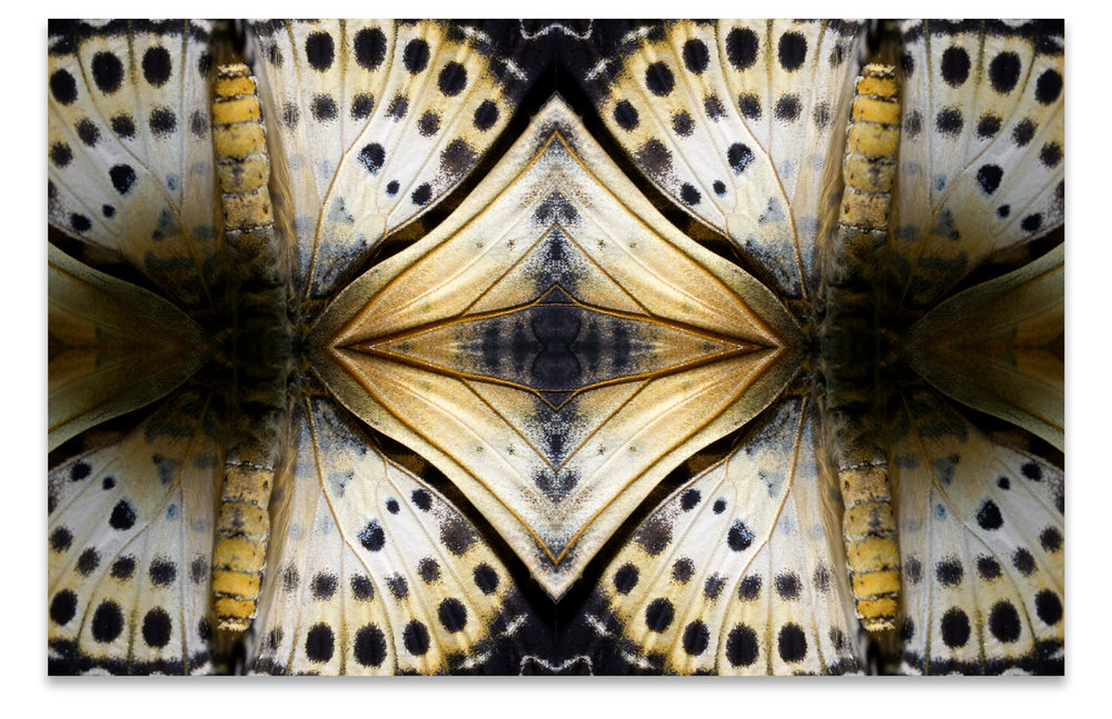 © BUTTERFLIES COMPOSITION No.3