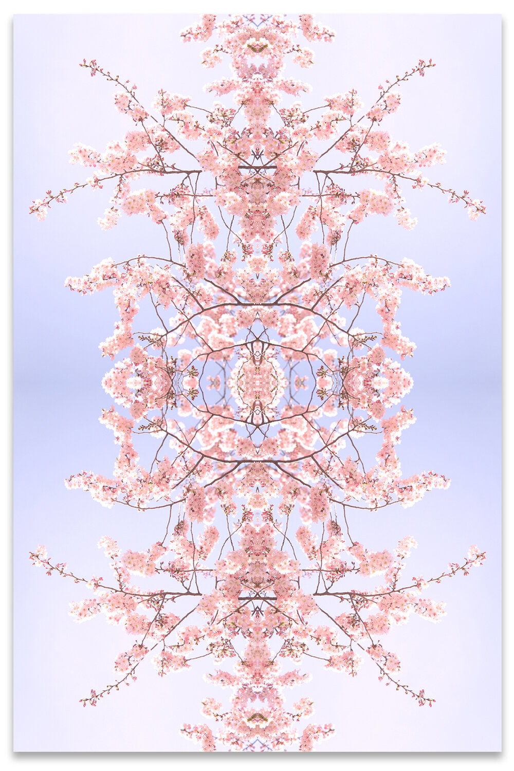 © CHERRY BLOSSOMS No.42