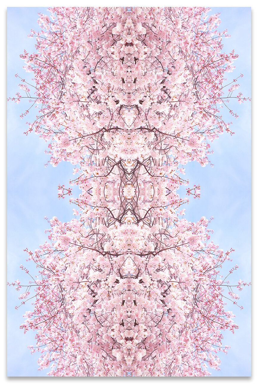 © CHERRY BLOSSOMS No.303