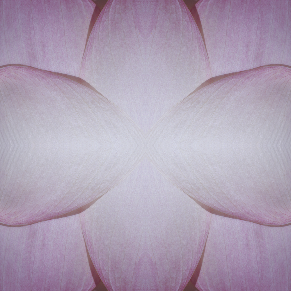 ©LOTUS FLOWER COMPOSITION No.63