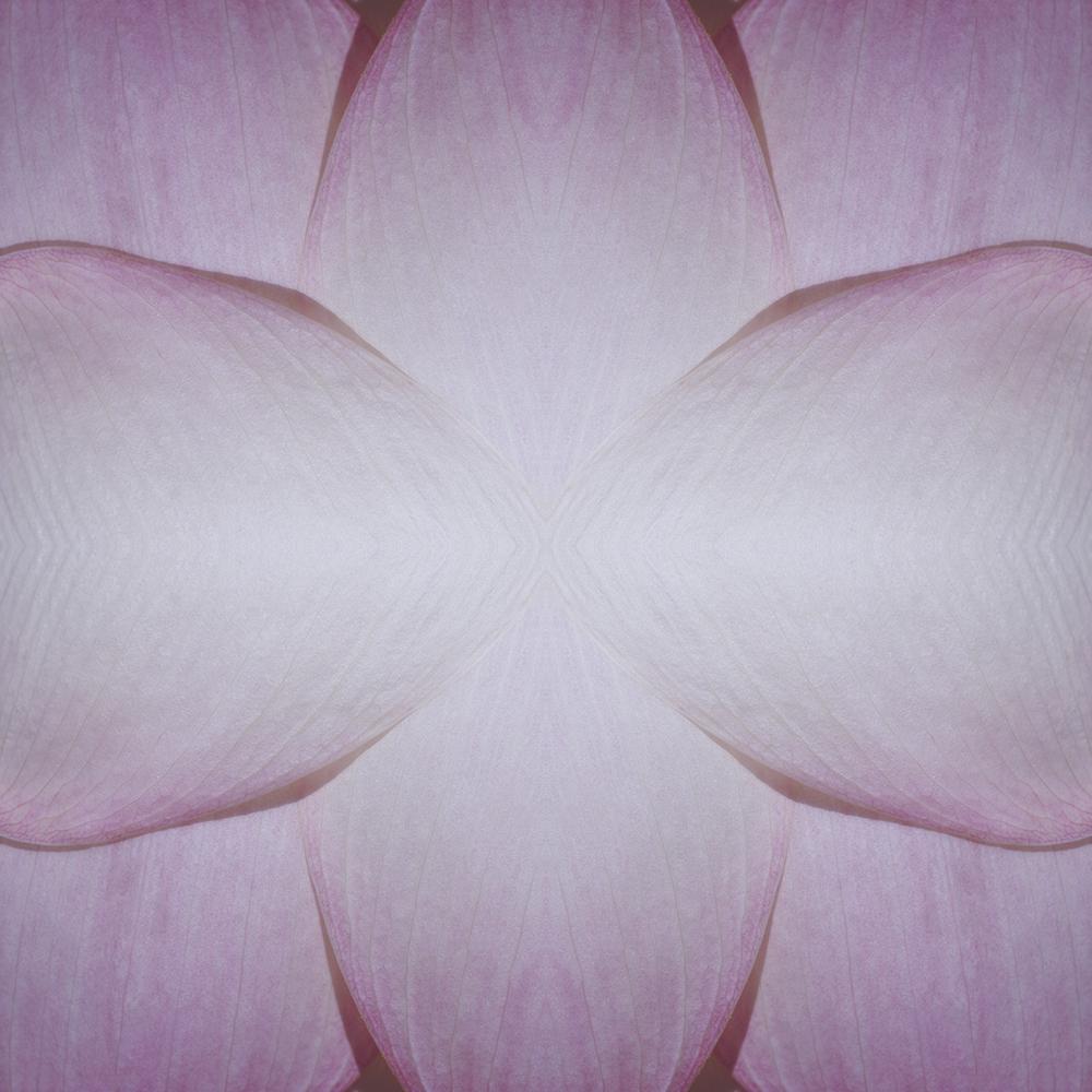 ©LOTUS FLOWER COMPOSITION No.63