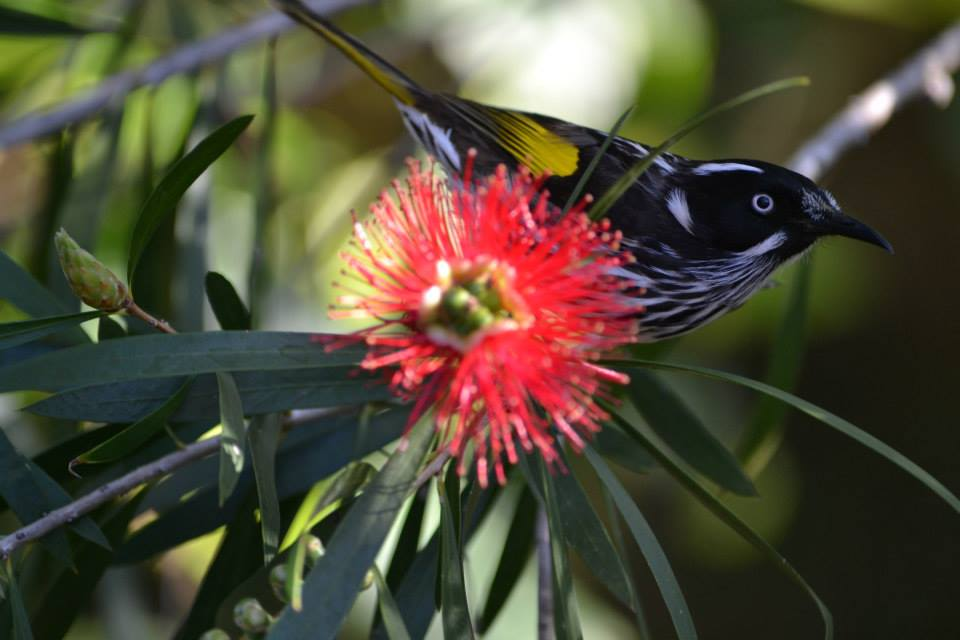 Red Flowers attract birds at HideAway Haven