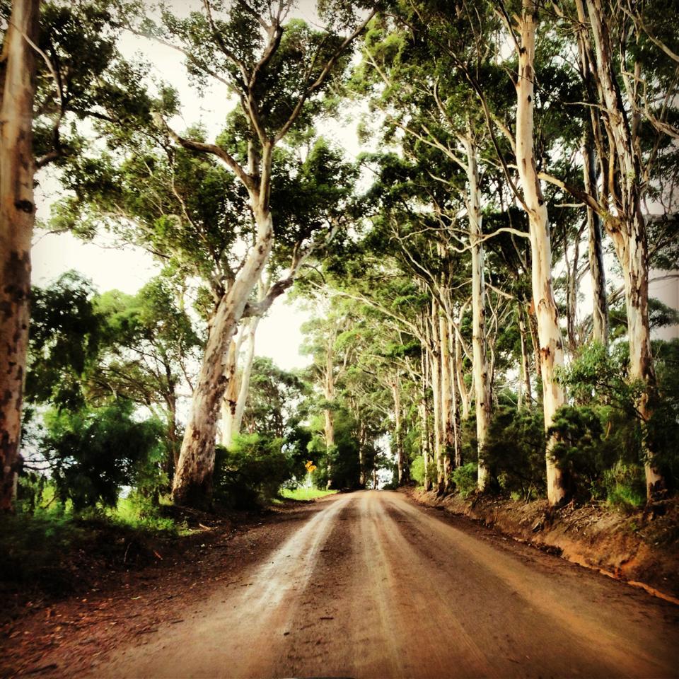 Munda Biddi trail Albany