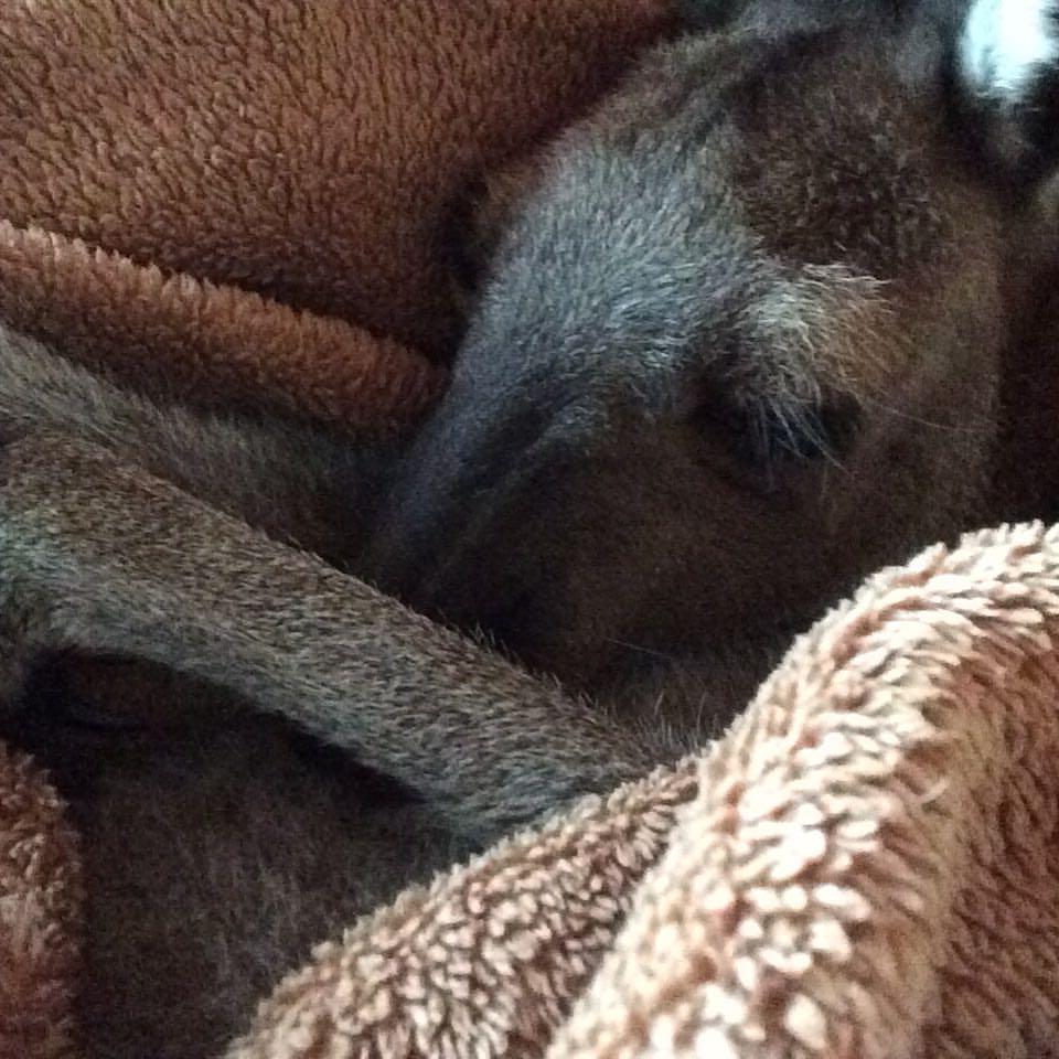 Sammie Jo cuddles