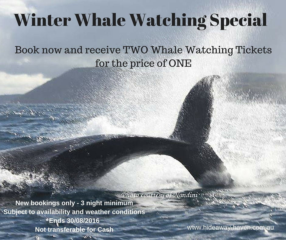Whale Watching Special at HideAway Haven