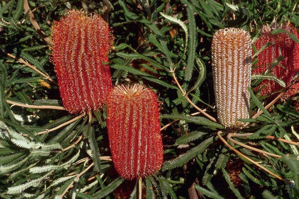 HideAway Haven Banksia