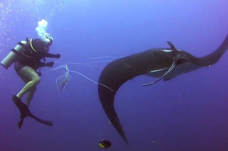 Credit: Oceano VideoSub