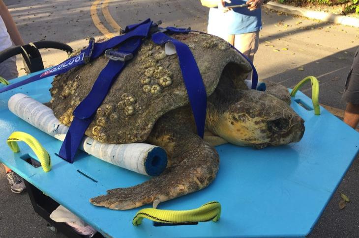 Rescue Wildlife Turtle