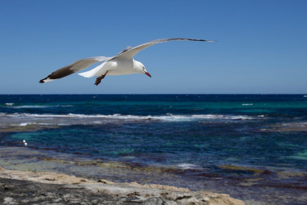 Western Australia, the real Australia