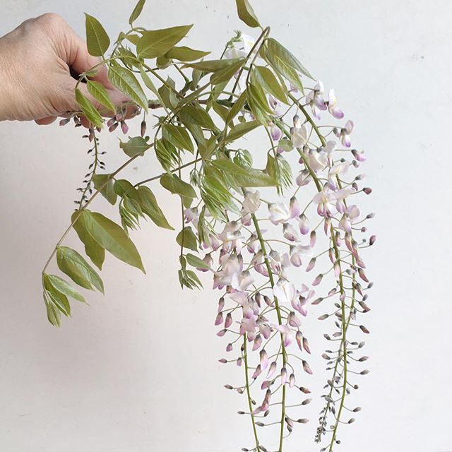 Must be time for Wysteria ! Sometimes, you need to step outside, get sone fresh air and remind yourself of who you are and who you want to be.