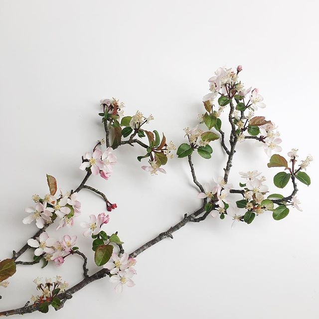In Japan blossom symbolises clouds, and is a metaphor for the ephemeral nature of life. Unfortunately blossom season in the uK is short lived although they also include the beautiful blossom from fruiting trees.