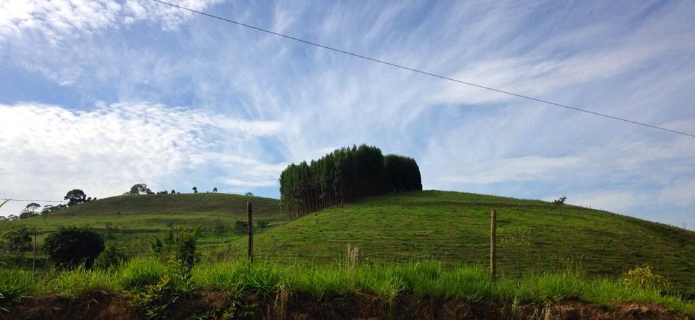 """Povoamento de eucaliptos nas colinas de Duas Barras, que serviu de inspiração pra obra """"Olhe Novamente""""."""