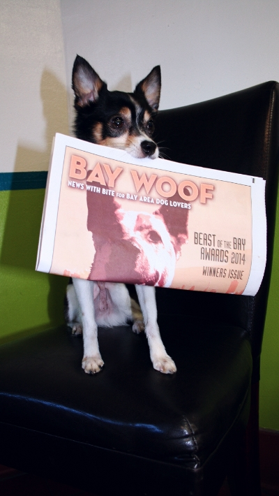 Visit www.baywoof.com for all your doggy news!