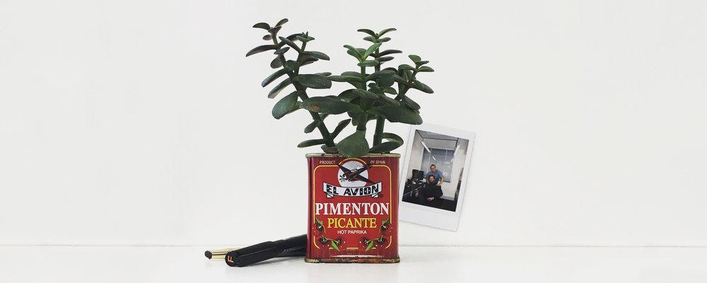 H&H Pot Plant