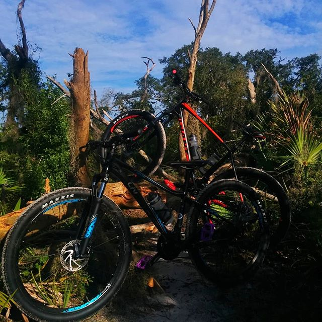 If a tree falls in the woods, will it be in our way? . . #mtb #floridaisflat #hardtailforlife #needsmorevelvia #36exposures #flatwoods