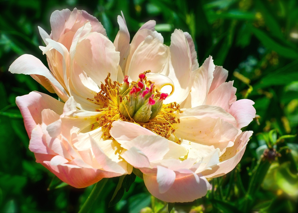 @ Flowers-LR&iP.jpg