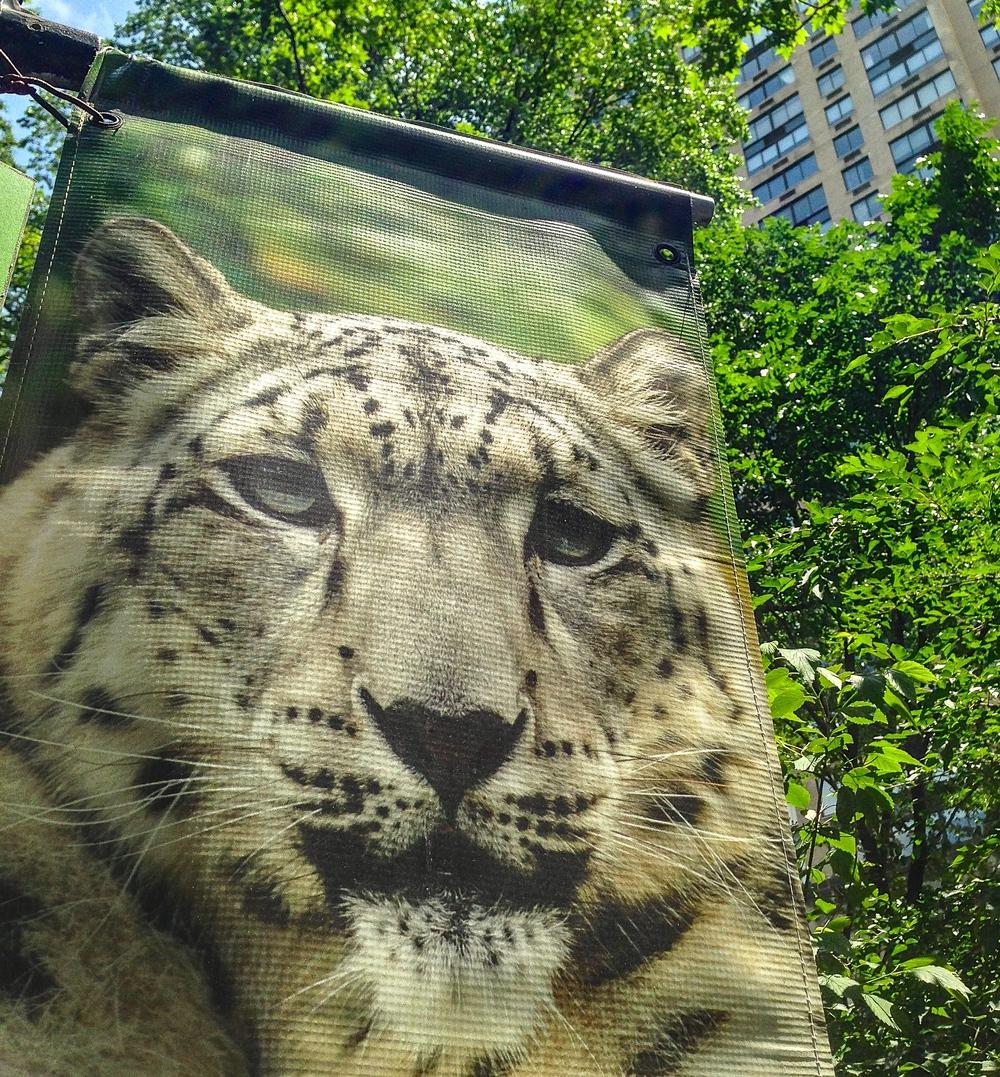 @ Leopard LR&ip.jpg