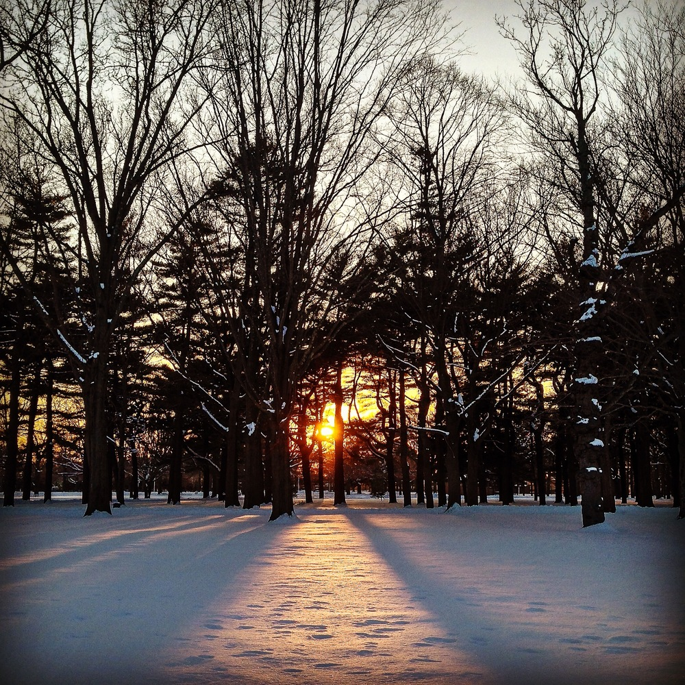 A sunset peeks through trees at Eisenhower Park in East Meadow, NY. (Photo: Joseph Kellard)