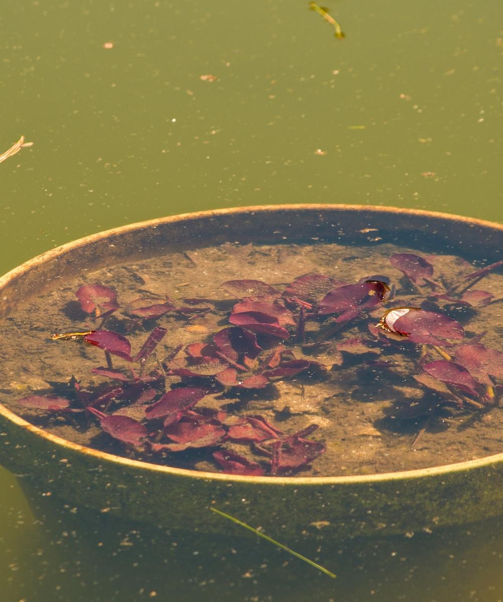 @ _Old Westbury Gardens_pond..jpg