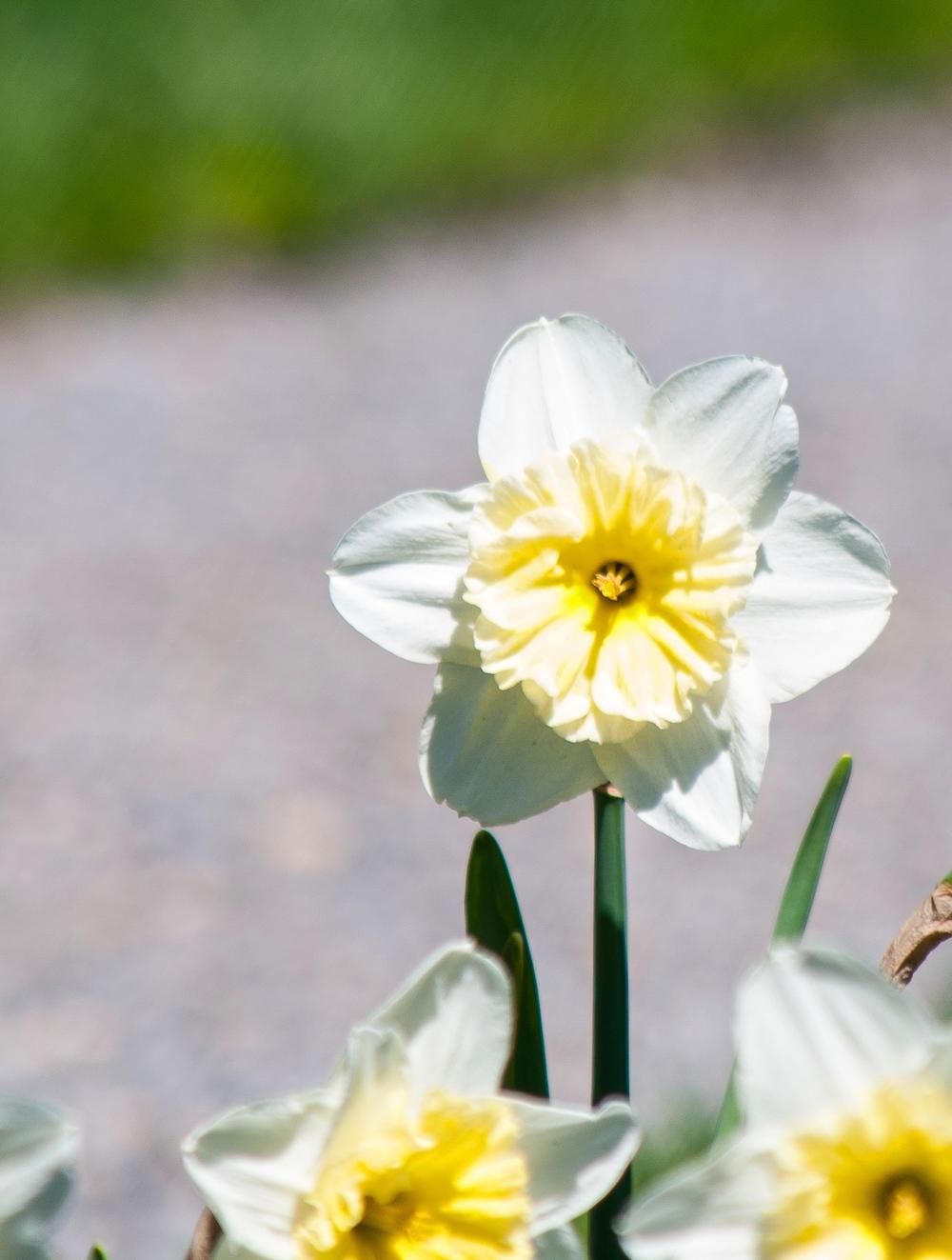 @_Old Westbury Gardens_flower.jpg