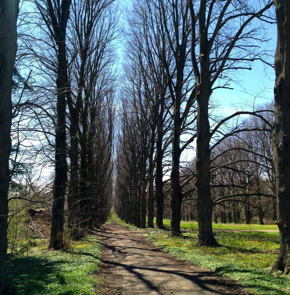 @_old westbury gardens-tree row.jpg