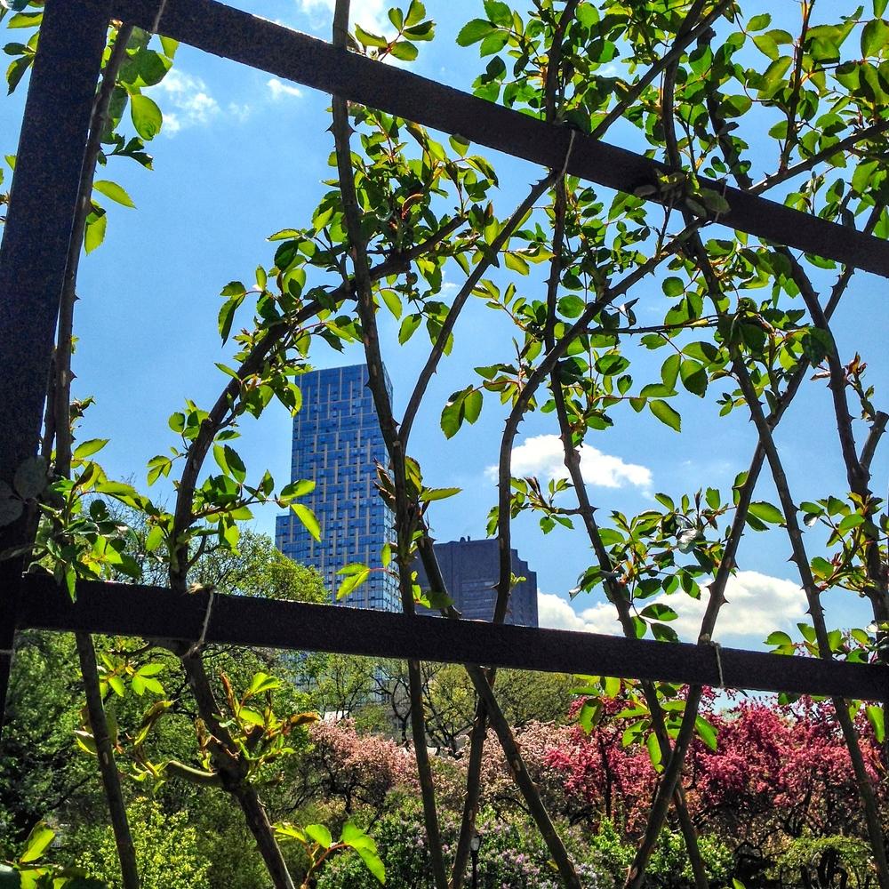 @ Central Park_Conservatory Garden_© 2015 Joseph Kellard-Kellardmedia.com-.jpg