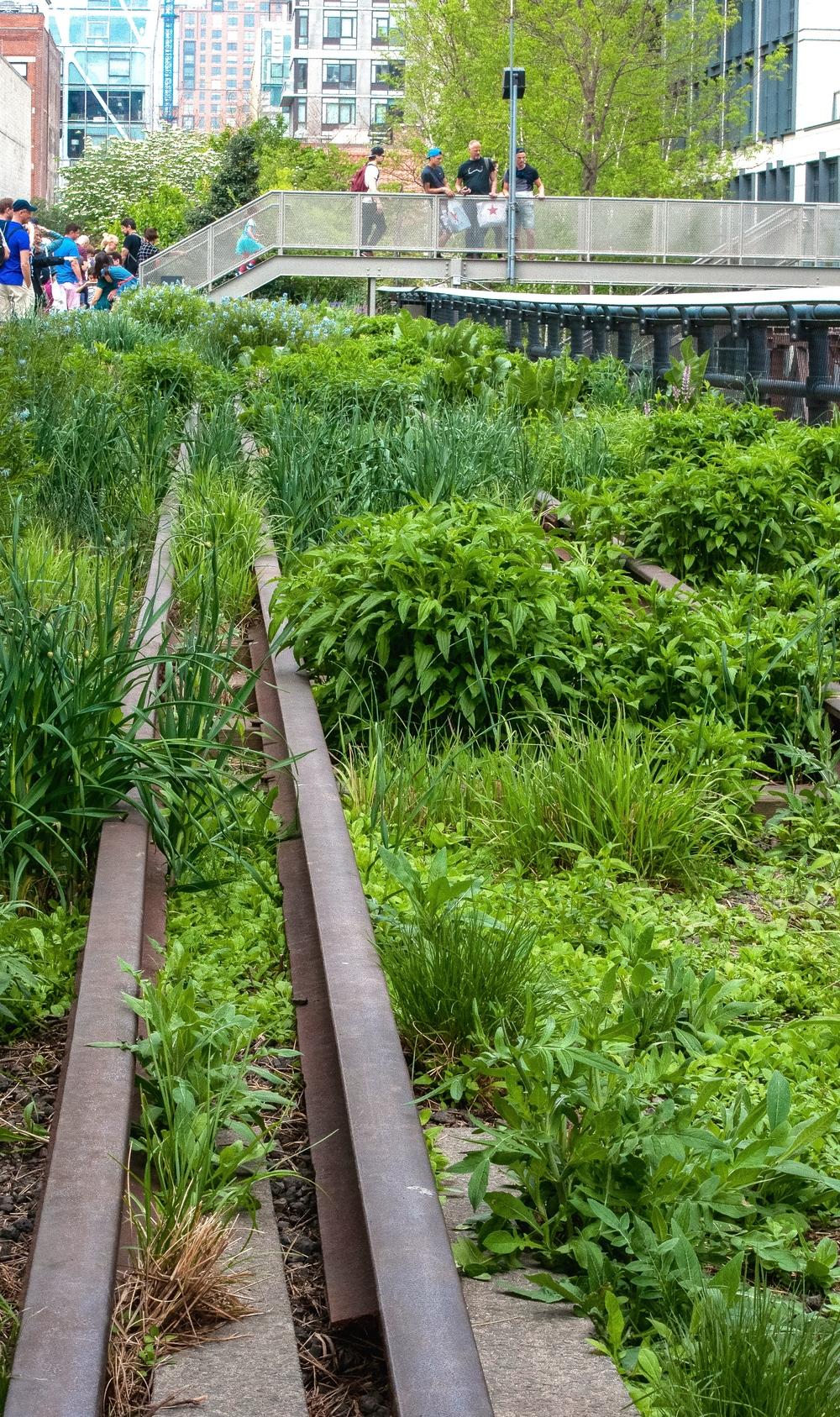 @ @ High Line..jpg