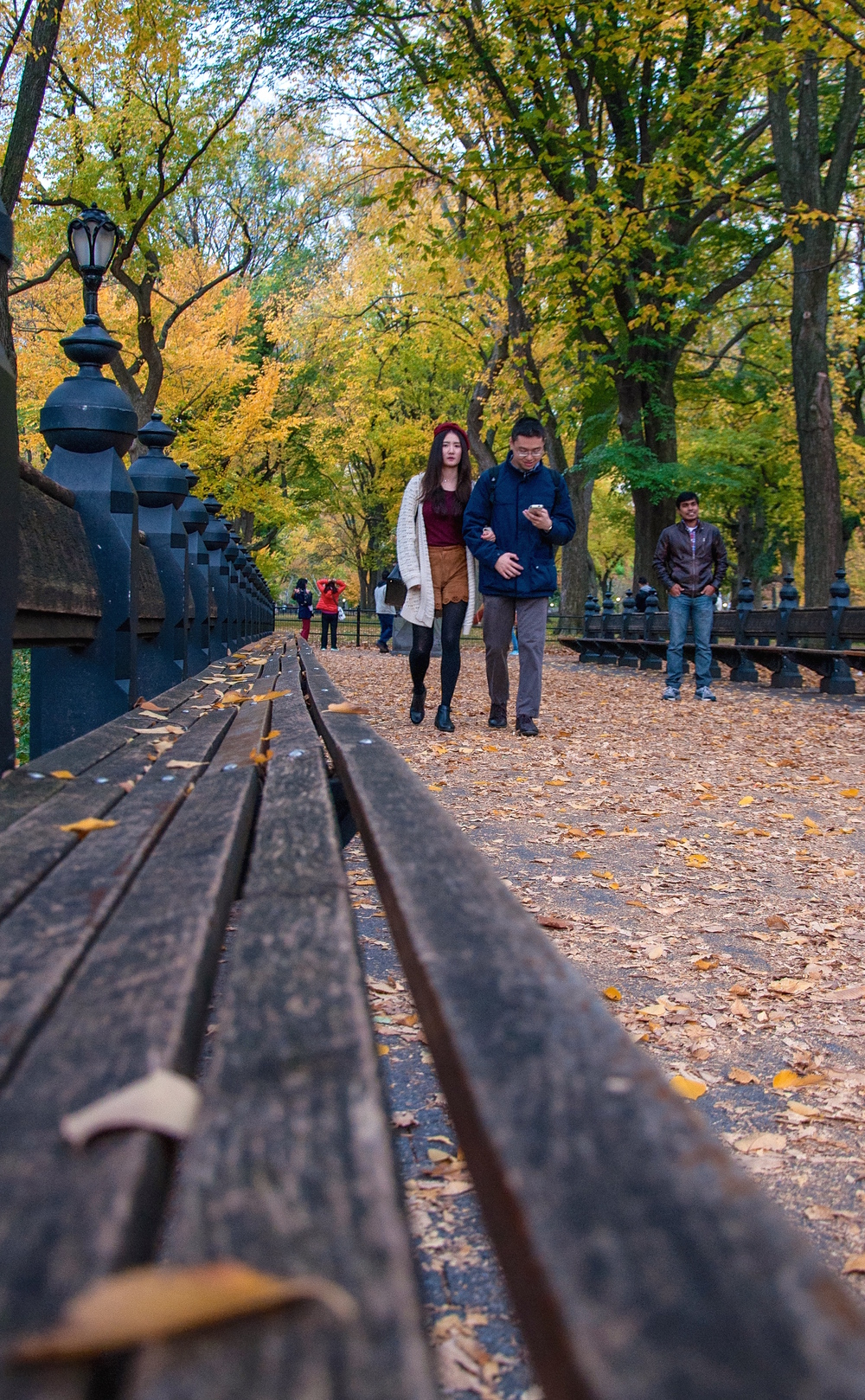 @ @ Central Park_Autumn leaves_benches_couple copy 2.jpg