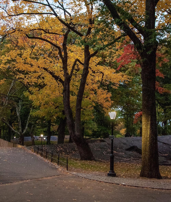 @ @ Central Park copy.jpg