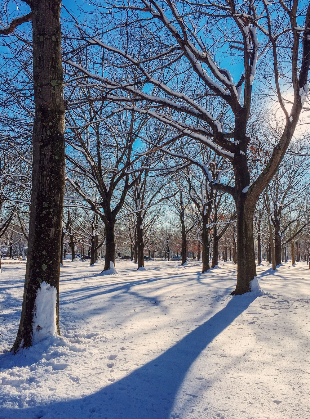 Eisenhower_snow_trees_2.5.16-3_Photo © 2016 Joseph Kellard:kellardmedia.com .JPG