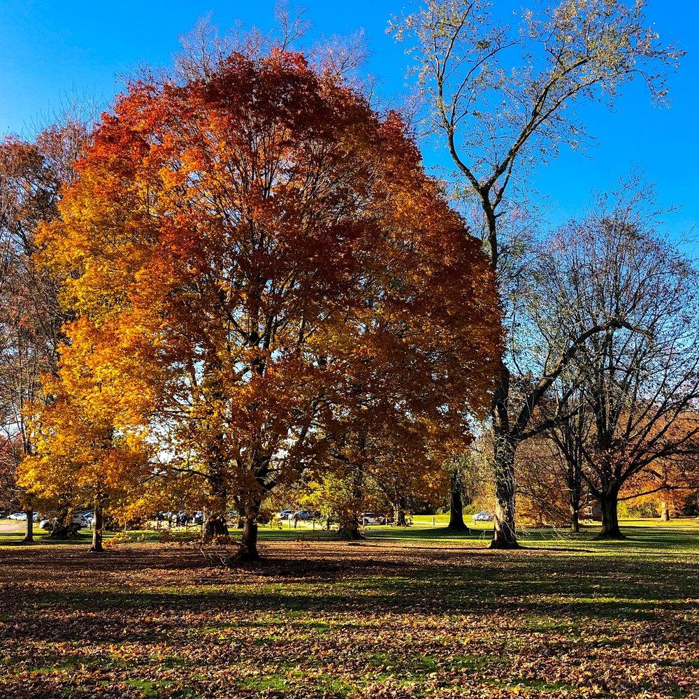 __@ Autumn tree_Old Westbury Gardens_11.11.18.jpg