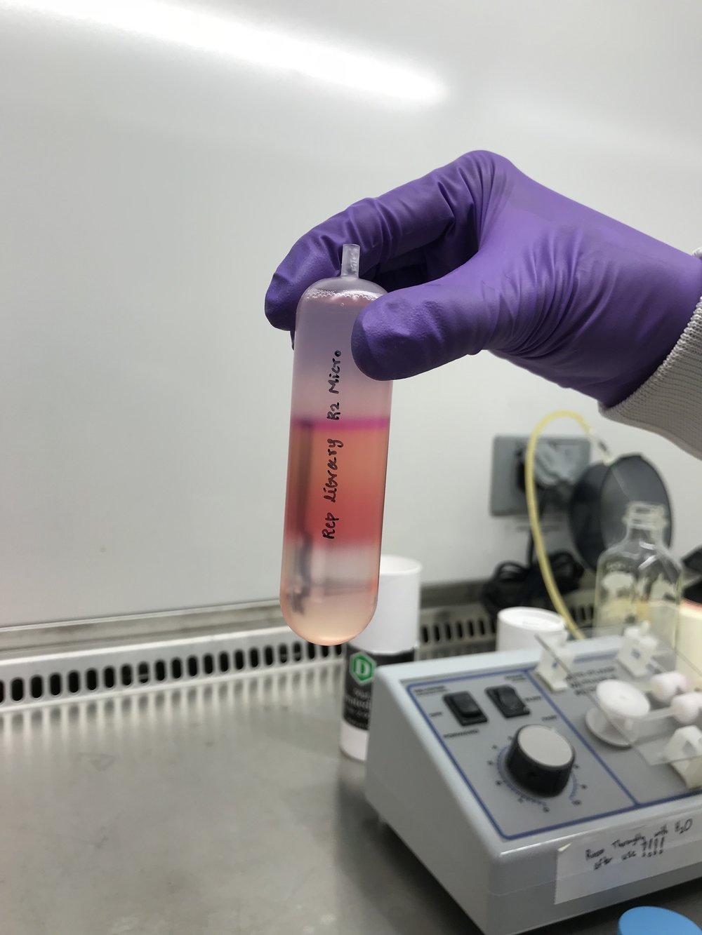 iodixanol gradient pre-centrifugation.jpg