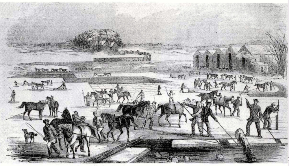 Ice Harvesting in Massachusetts, early 1850s.