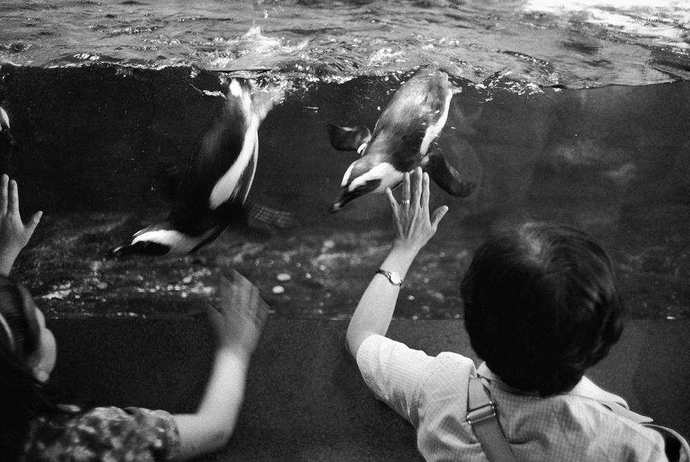 penguin_web.jpg